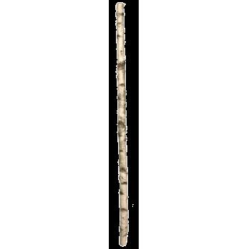 Birkenstamm-natur-img-60062